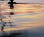 Soft water at sunset