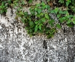 A mouldering wall