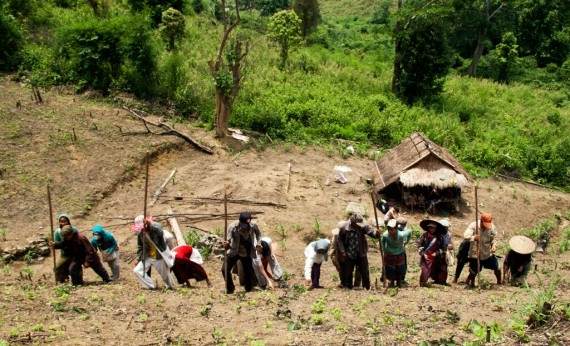 Planting rice on the way down from Ban Houy Fai