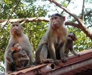 Monkeys in Matheran